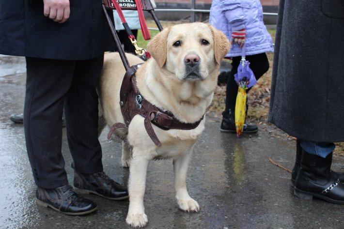 Приходи на презентацию и узнай о новом проекте, посвященном собакам-поводырям