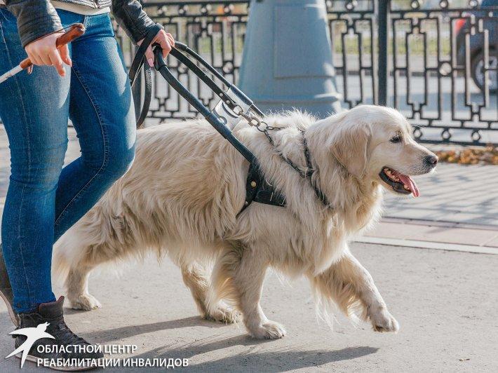 В Екатеринбурге стартует проект, посвященный собакам-проводникам